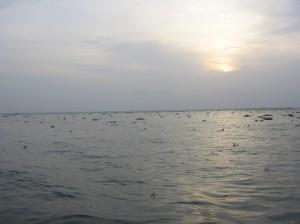 cochin 017
